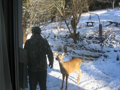Deer Touch