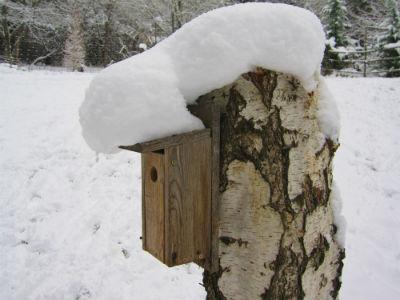 Snow Bird House