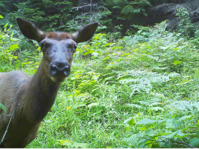 Elk close up mountain cathedrals elk close up publicscrutiny Image collections