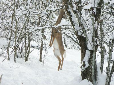 Deer Stretch